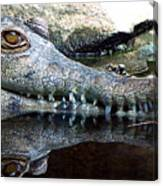 Crocodile X2 Canvas Print