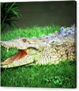 Crocodylus Acutus Canvas Print
