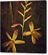 Crocosmia Canvas Print