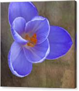 Crocus Focus Stacked 3 Canvas Print