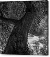 Crooked Oak Black And White Canvas Print
