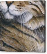Cropped Cat 6 Canvas Print