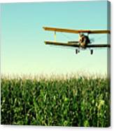 Crops Dusted Canvas Print