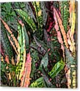 Croton 3 Canvas Print