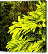 Croton Cascading Down The Hillside Canvas Print