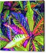 Croton Foliage Canvas Print