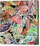 Croton Tropical Art Print Canvas Print