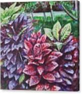 Crotons 1 Canvas Print