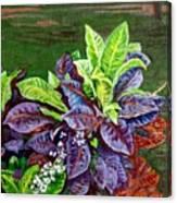 Crotons 2 Canvas Print