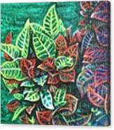 Crotons 3 Canvas Print