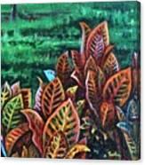 Crotons 4 Canvas Print