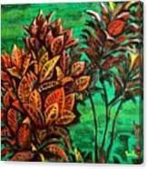 Crotons 5 Canvas Print