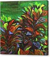 Crotons 6 Canvas Print