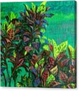 Crotons 7 Canvas Print