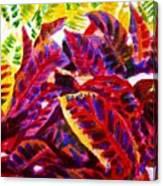 Crotons Sunlit 1 Canvas Print