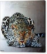 Crouching Leopard Canvas Print
