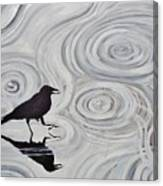 Crow In A Rain Puddle Canvas Print