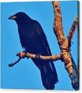 Crow In A Tree Canvas Print