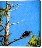 Crow In An Old Tree Canvas Print