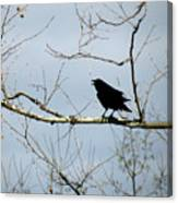 Crow In Sycamore Canvas Print