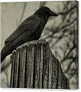 Crow Perched On A Old Column In Rain Canvas Print