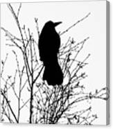 Crow Rook Perched In A Tree With Pare Branches In Winter Canvas Print