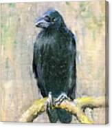 Crow Vigilant Canvas Print