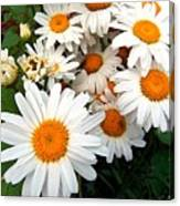 Crowd Of Daisies Canvas Print