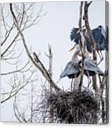 Crowded Nest Canvas Print