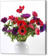 crown Anemone in a white vase Canvas Print