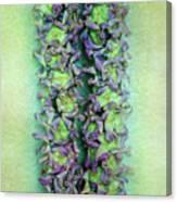 Crown Flower Lei Canvas Print