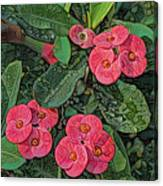Crown Of Thorns Delight Canvas Print