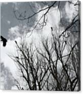 Crows In Cottonwoods Canvas Print