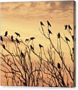 Crows In Their Twitter Cloud. Canvas Print
