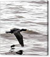 Cruising Cormorant Canvas Print