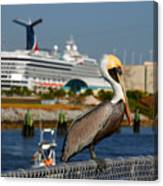 Cruising Pelican Canvas Print