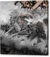Crystal Clamshell Canvas Print