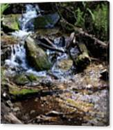 Crystal Clear Creek Canvas Print
