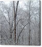 Crystal Woods Canvas Print