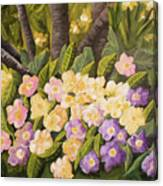 Crystal's Primroses Canvas Print
