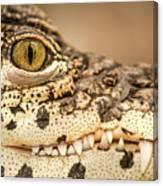 Cuban Croc Smile Canvas Print