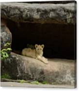 Cubs In Cave Canvas Print