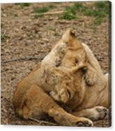 Cubs Wrestling Canvas Print