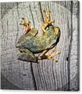 Cudjoe Key Frog Canvas Print