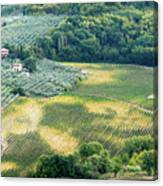 Cultivated Vineyards Tuscany  Italy Canvas Print