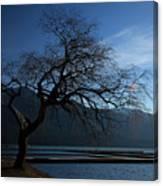 Cultus Tree Canvas Print