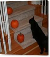 Curious Black Cat Canvas Print