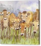 Curious Calves Canvas Print