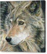 Curious Eyes Canvas Print