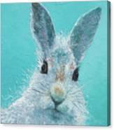 Curious Grey Rabbit Canvas Print